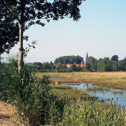 Arsbroek_1 (2) (Small)